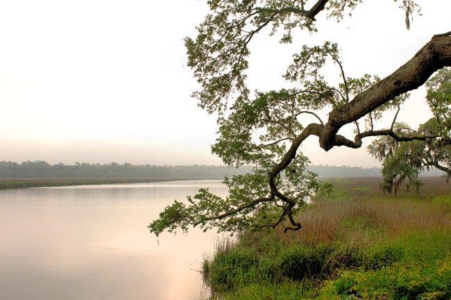 Oak on the Ashley River