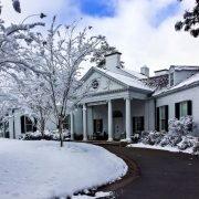 Banksia Snow