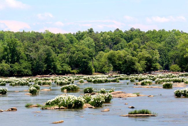 Catawba River Shoals