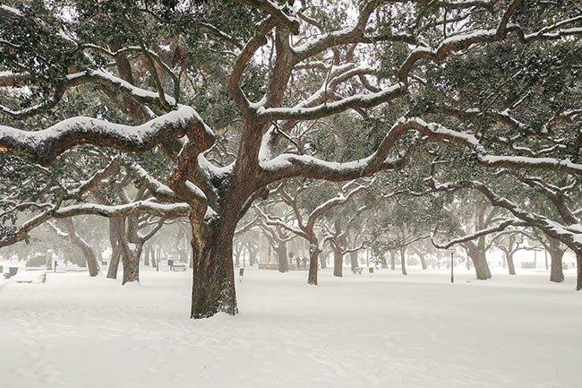 White Point Garden - Charleston Battery, snow
