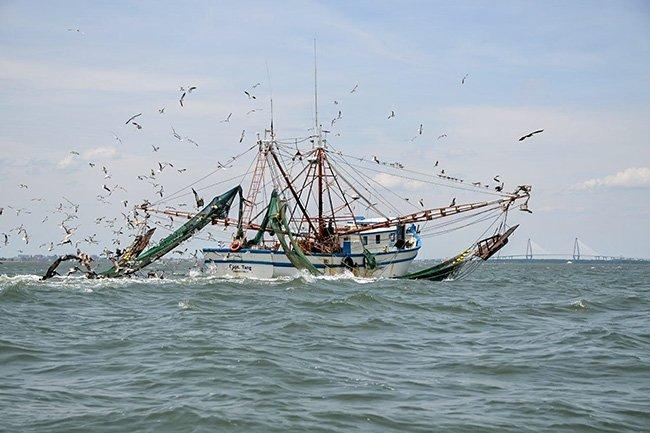 Shrimp Boat in Charleston Harbor