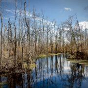 Cowtail Creek