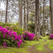 Edisto Memorial Gardens