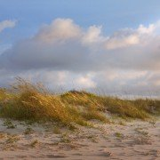 Folly Beach Dunes