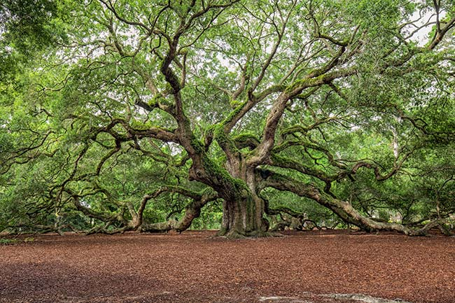 John Sabatier - Angel Oak