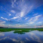 Murrells Inlet Marsh