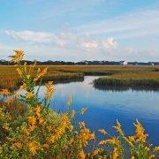 Pawleys Island Creek