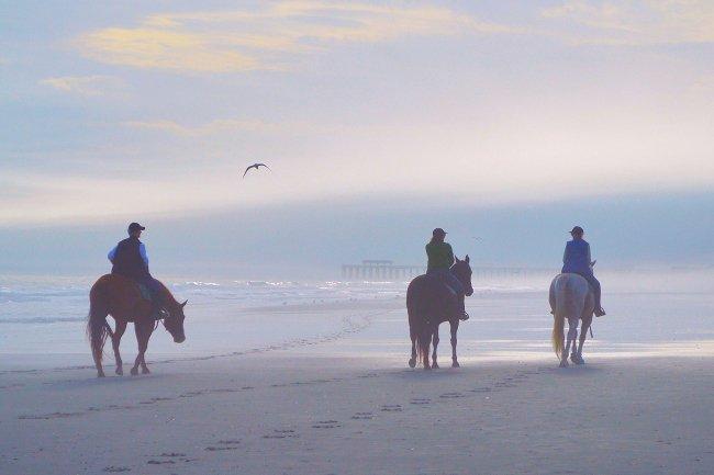 Horses at Springmaid Pier in Myrtle Beach