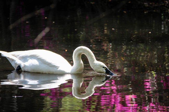 Swan Lake Sumter County