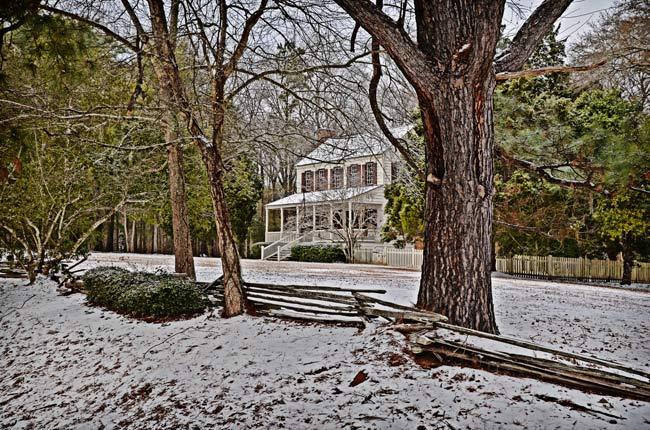 Thorntree Snow