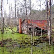 Forgotten House