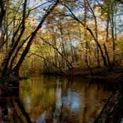 Congaree Creek