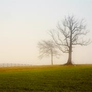 Two Trees and Fog