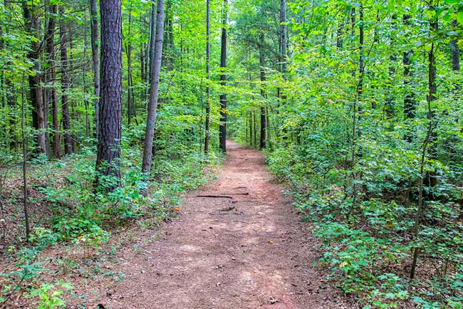 Anne Springs Close Trail