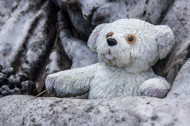Magnolia Cemetery Bear
