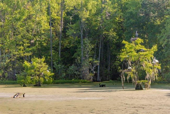 Magnolia Plantation And Gardens Charleston South Carolina Sc