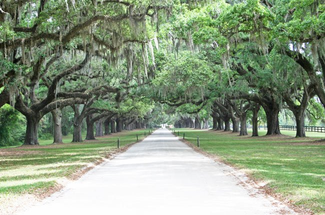 Avenue Oaks Boone Hall