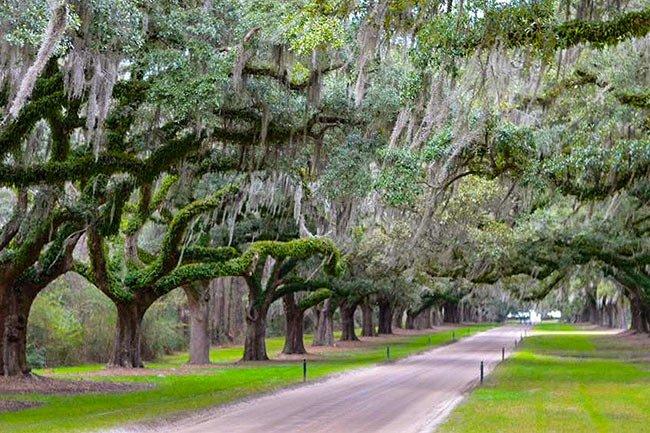 Boone Hall Plantation Avenue of Oaks