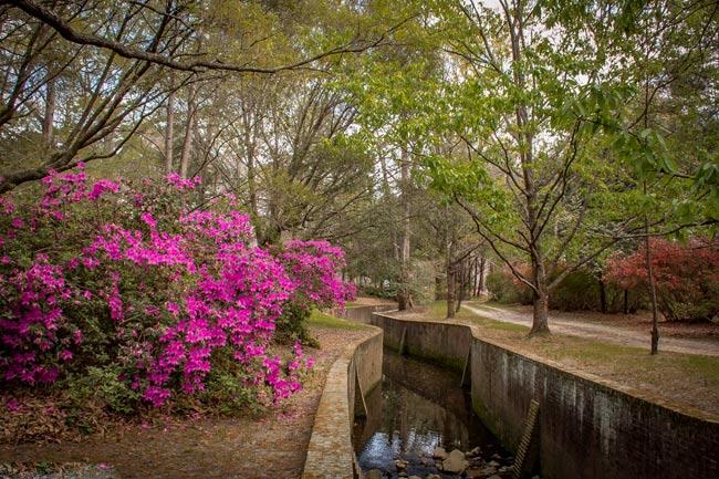 Azalea Park by Thia Beniash