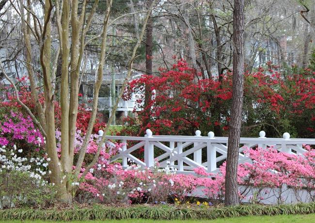 Azalea Park in Summerville, SC