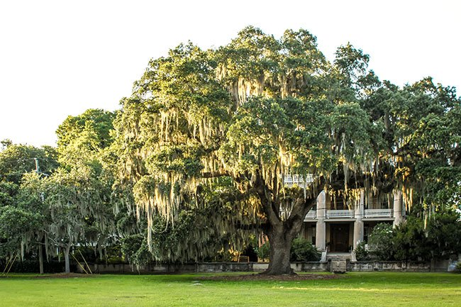 Block In Downtown Beaufort The Green As It Is Known Has Been Used A Park For More Than 150 Years Though Until Recently Property Was Owned