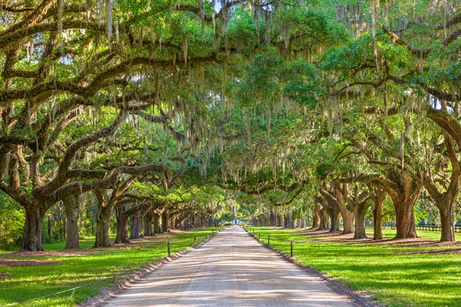 Boone Hall Plantation Oak Avenue