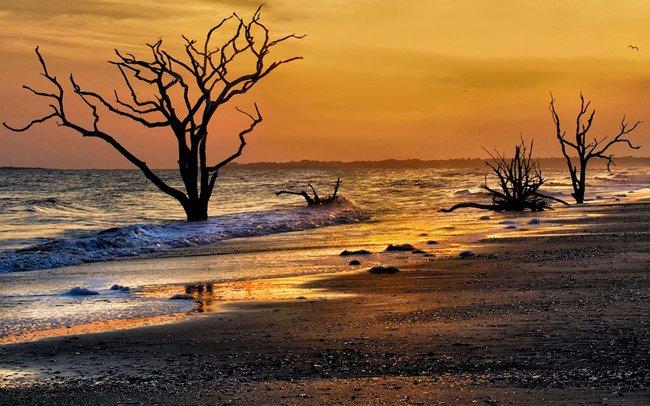 Botany ay Beach