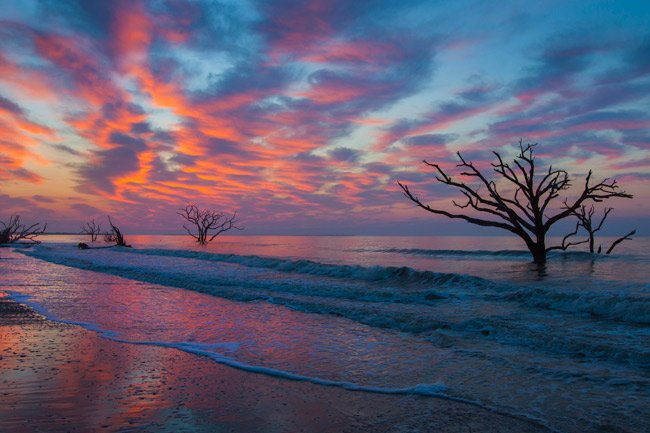 Botany Bay Edisto Beach