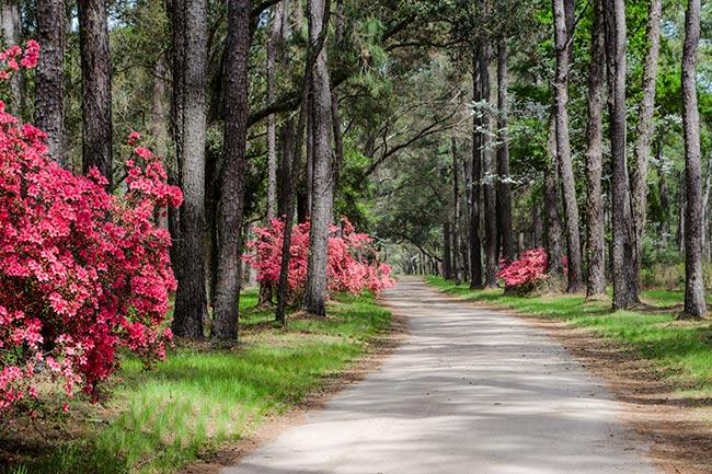 Botany Bay in Spring