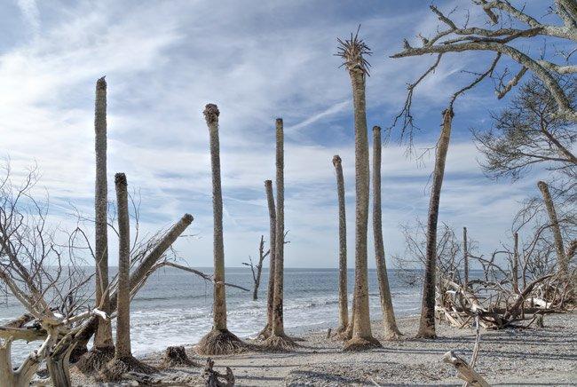 Botany Bay Palmettos