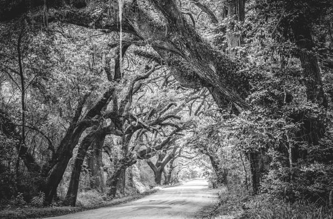 Botany Bay Road Black White