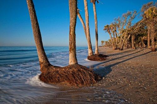 Botany Bay Island Sc Real Estate