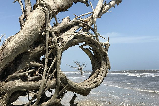 Botany Bay Boneyard Beach