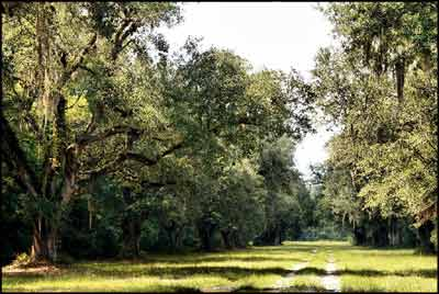 Camp Vere Plantation