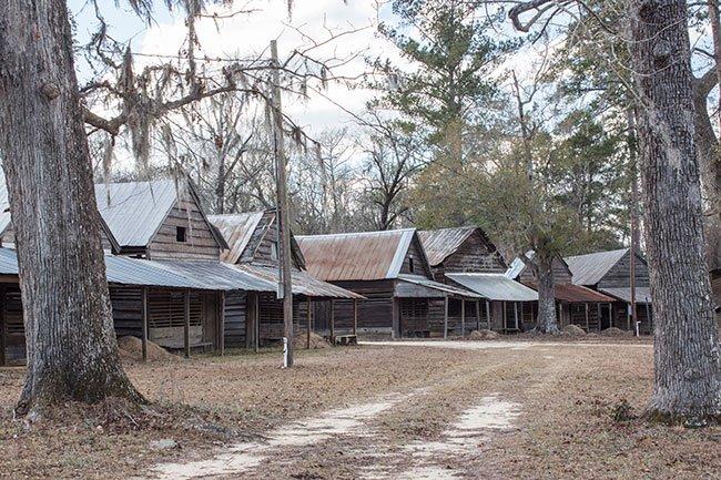 Cattle Creek Campground Dricve