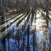 Caw Caw Rainbow Swamp