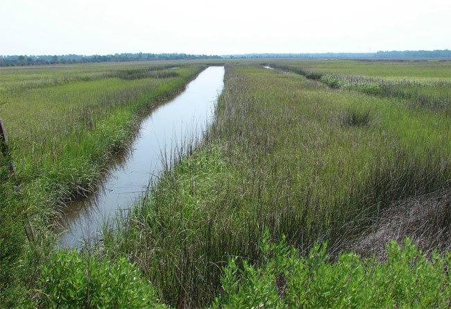 Caw Caw Rice Field