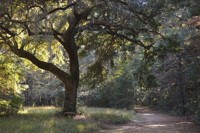 Caw Caw Trail
