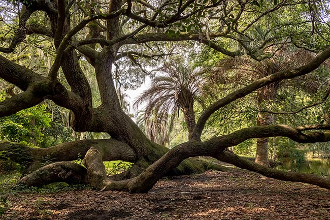 Charles Towne Landing Natural Area