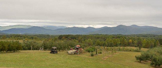 Chattooga Belle Apple Harvest