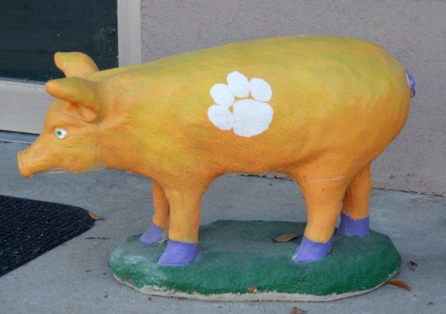 Clemson Pig