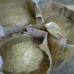 COAST's Malt Barley
