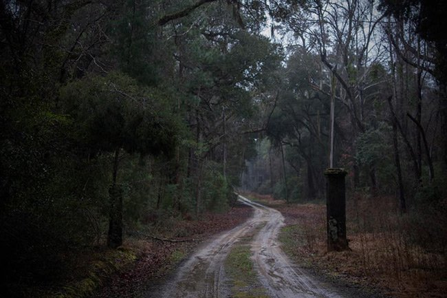 Comingtee Plantation Entrance Road