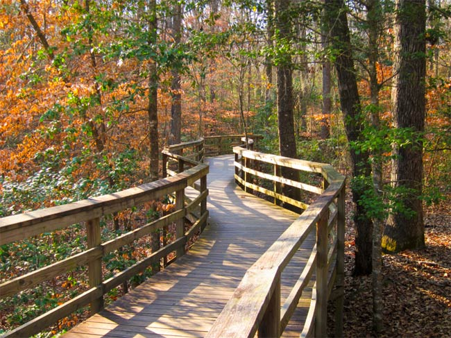 Congaree Boardwalk