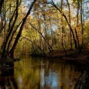 Congaree Creek Preserve