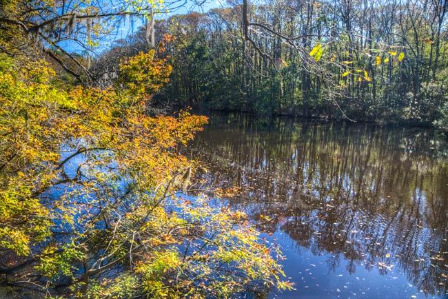 Congaree Park River