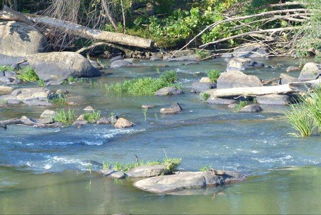 Congaree River Columbia