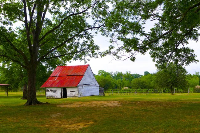 Barn at Cottontop Farm