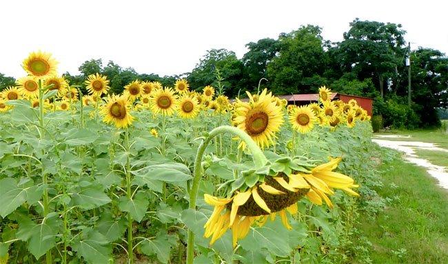 Fields at Cottontop Farm