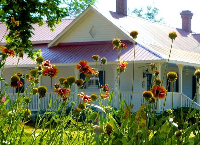 Cottontop Norway Orangeburg County